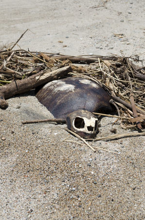 Dead turtle at the beach