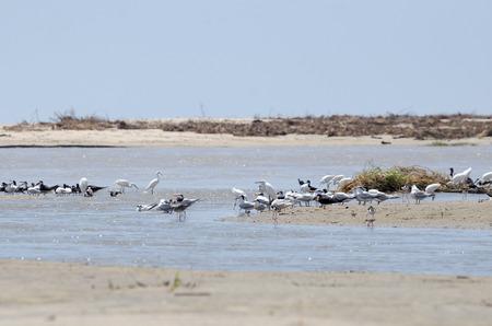 Numerous coastal birds at the beach