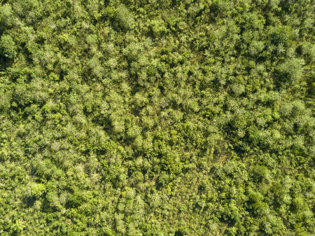 Natural green background - aerial view of tropical bushes Stock Photo