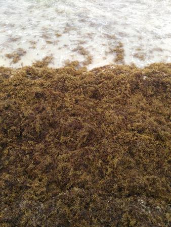 Seaweed covering beach