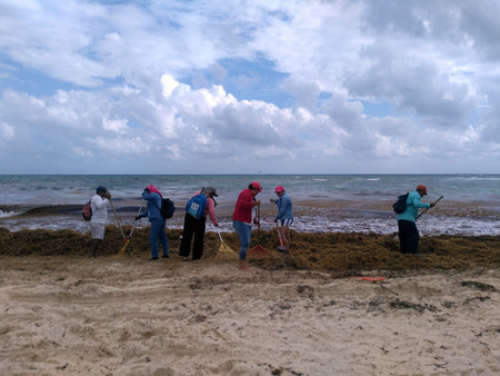 PLAYA DEL CARMEN, MEXICO, 03 JAN 2019: workers cleaning public beach from massive amount of seaweed brought to the coast by tide