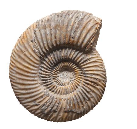 Plant blad fossiel in steen, op wit wordt geïsoleerd Stockfoto