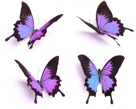 descriptive colours: Blue and colorful butterfly on white background