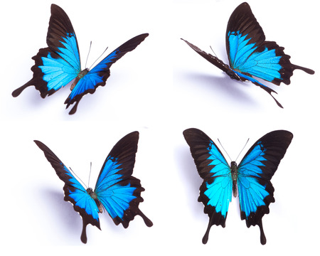 blue background pattern: Blue and colorful butterfly on white background