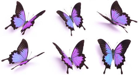 Blauw en kleurrijke vlinder op een witte achtergrond Stockfoto