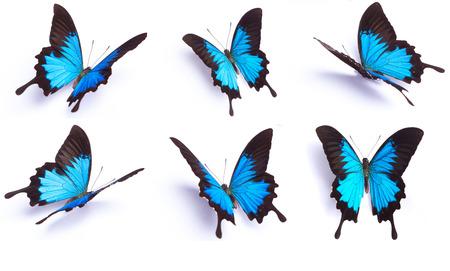 흰색 배경에 파란색과 화려한 나비
