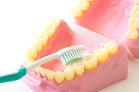 Denture shows how to use toothbrush, dental equipment