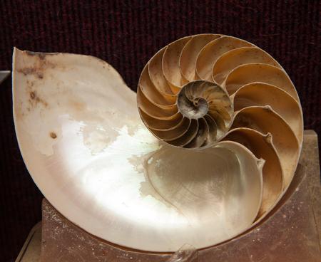 petrified fossil: Fossil, Ammonite, Ammonitida, Stock Photo