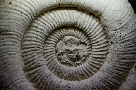 Fossil Ammonite for fuel and gas industry 写真素材
