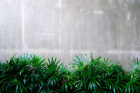 Cement wall with tree abstract background Фото со стока