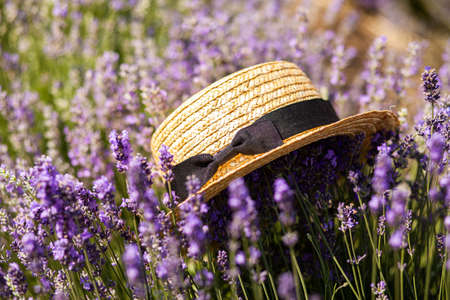 Straw hat with a ribbon in the field of lavender