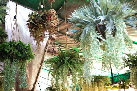 Plant fern hang from roof and another plant