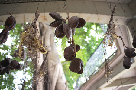 Hanging bunches of flowerr in the garden