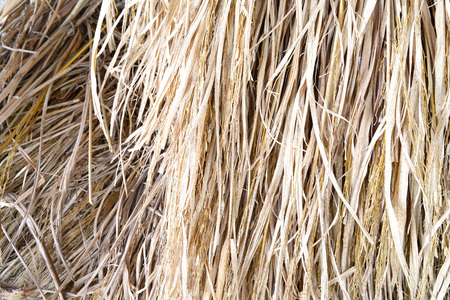 Brrown dry rice straw background and texture Foto de archivo
