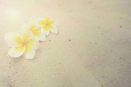 Plumeria or Frangipani flower on the sand in the nature light