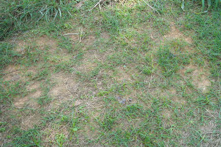grass growth on the soil floor