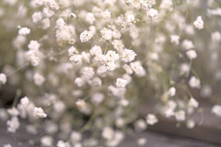 selective focus of white flower background for greeting cards or presentation Banque d'images