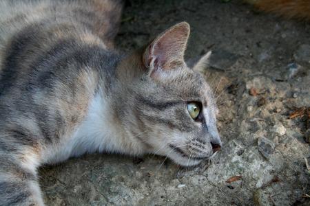 catlike: Kitty