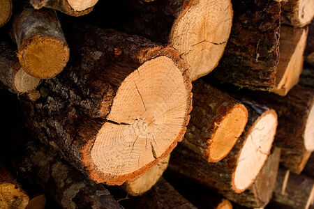 Wood Foto de archivo