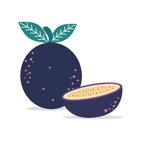 passion fruit isolated on white background vector illustration Иллюстрация
