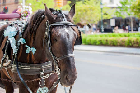Horse pulling a carriage Stock Photo