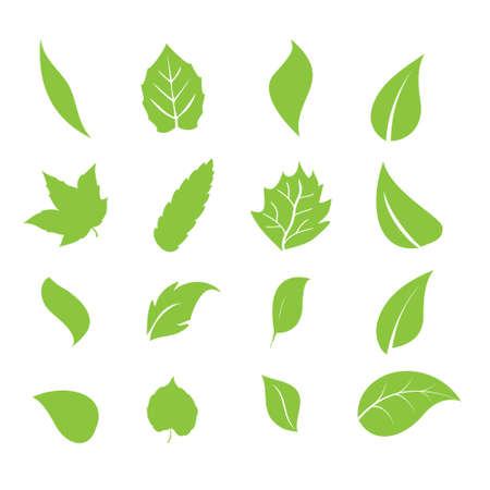 leaf shapes Illustration