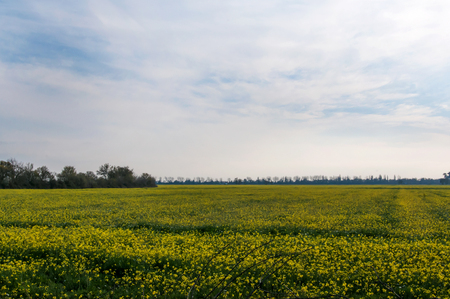 Cloudy sky over a yellow flowery field Stock Photo