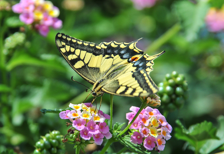 Colorful butterfly in a plant