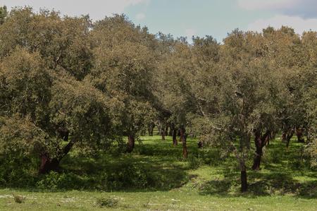 Field of trees Stock Photo