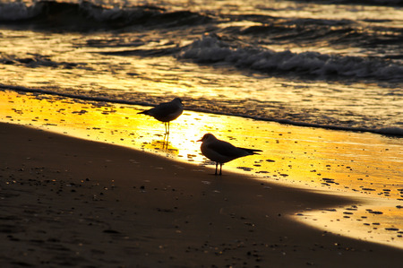 Seagulls by the water at sunset