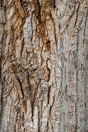 Tree bark, detail of texture