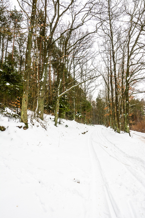 winter weather: White winter on the forest path, landscape