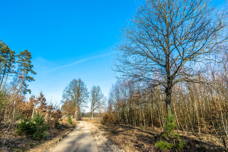 suelo arenoso: Romantic countryside fall landscape with dirt road and young forest, european nature scenery
