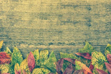 落ち葉の境界線、秋のフレームの背景