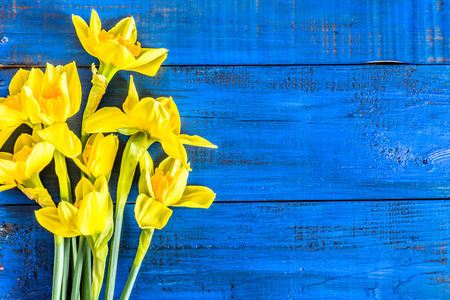 Beautiful daffodils flowers selected on wooden background Stock Photo