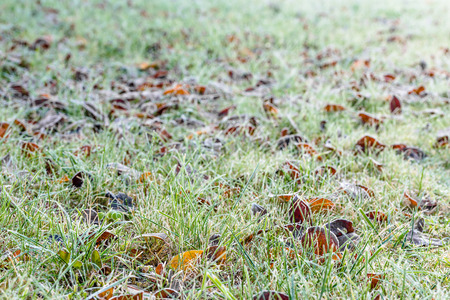 frosted: Morning frost on grass, frozen leaves, frosted winter nature