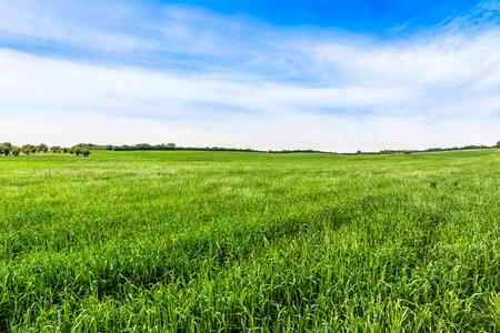 Vibrant green field landscape, rural field in the summer