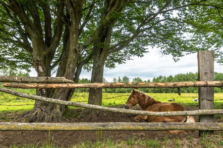 Lying horse on field in countryside scenery at spring, landscape Stock Photo