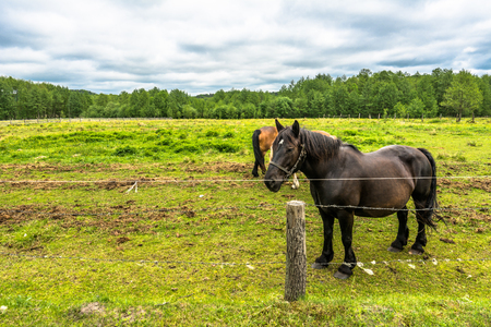 Beautiful horses grazing on green field, horse farm, countryside landscape Stock Photo