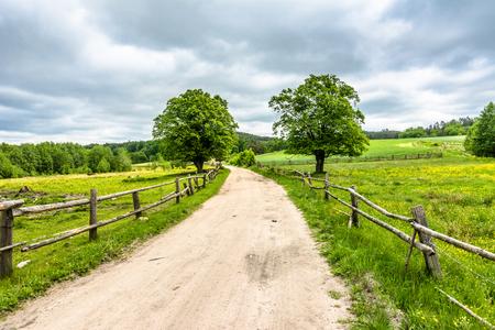 Camino rural en la granja con campo verde, paisaje de verano