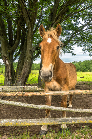 Beautiful horse on field behind wooden fence, horse farm, country landscape