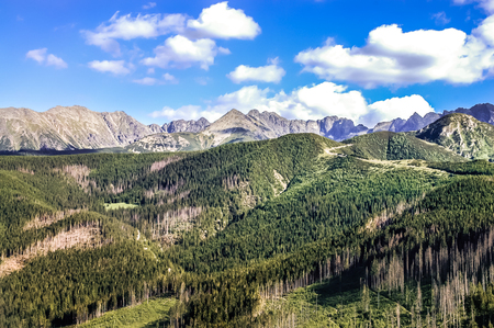 orla: Landscape of the Tatra Mountains in the summer, covered by coniferous forests, view from the top of Nosal. Beautiful panorama of the polish mountains in the holiday, Zakopane, Poland Stock Photo