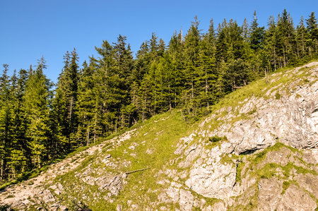 Panoramic vista of the Tatra Mountains in the summer. Rocks and forest, Zakopane, Poland