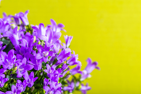 Spring flowers background with copy space.