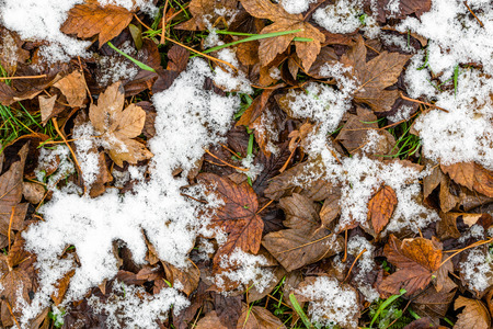 frosty: First snow on dead leaves, early winter or thaws in spring Stock Photo