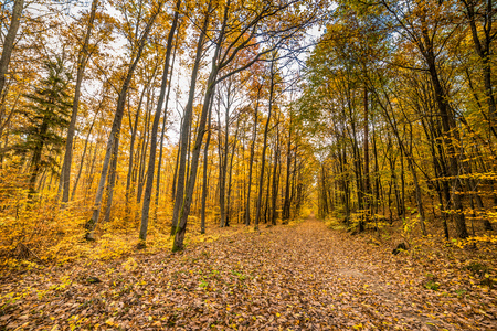 fallen tree: Nature trail with fallen leaves in fall forest, autumn landscape Stock Photo