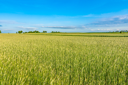Landscape of field with cereal, rural scene of farming in Europe