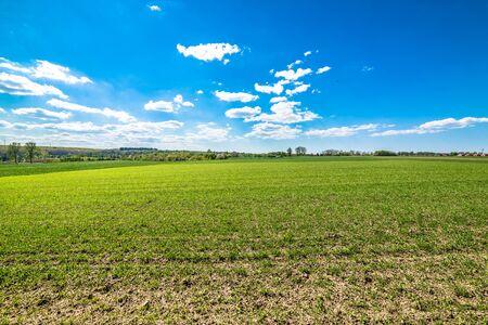 Green field landscape, blue sky on the horizon