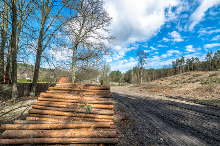 Stack of wood logs by the country road, landscape Stock Photo