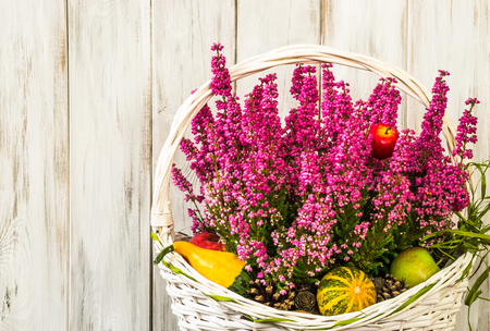 ericaceae: Basket of heather flowers on wooden background, autumn home decoration